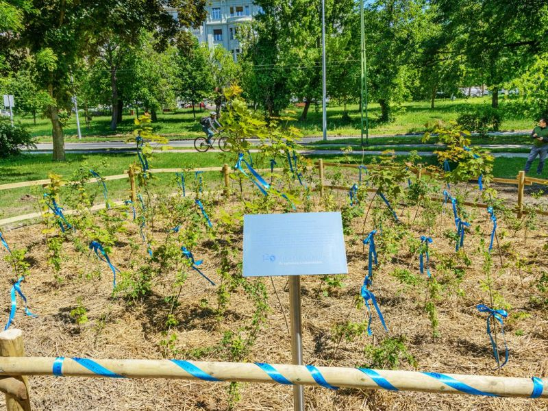 Budapest's first mini-forest created with the support of Richter